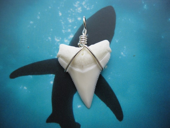 Shark Tooth Necklace Pendant, Modern Day White Shark tooth, Silver plated wire wrap