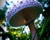 Mushroom Photo Art 5 x 7 Earthy Organic Fairy Home
