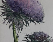 MUSK THISTLE  zinc plate etching drawn, hand pulled and hand colored by artist