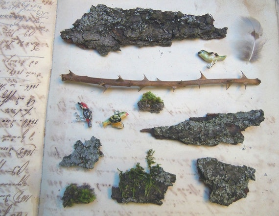 Naturalist speciments from England forest