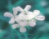 Wild Flowers Art Print - Aqua Teal White Soft Dreamy Wall Art Nursery Girl Room Home Decor Floral Photography