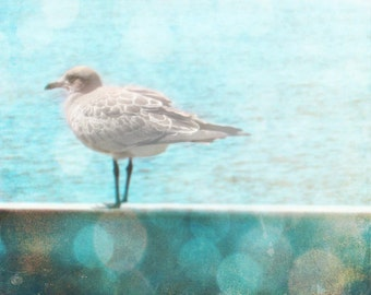 Seagull Beach Photo - Blue Aqua Bokeh Home Decor Wall Art Bird Whimsical Photograph