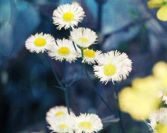 Wild Daisy Flower Art Print - Navy Blue Yellow White Floral Garden Natural Nursery Wall Art Home Decor Photography