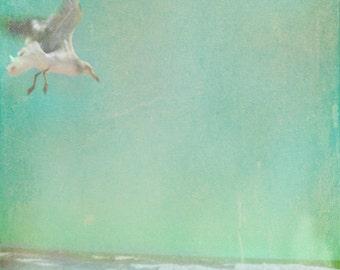 Vintage Seagull Beach Art Print - Blue Green Aqua Pastel Ocean Beach House Wall Art Photograph