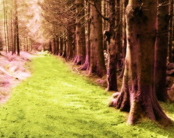 Trees Whimsical Forest Nature Print - Pink Green Fine Art Nursery Girls Room Decor Photograph