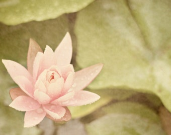 Water Lily Art Print - Pink Green Pastel Dreamy Romantic French Country Vintage Nursery Girl Room Home Decor Flower Photograph