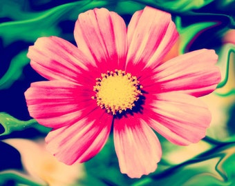 Pink Gerber Daisy Print  - Flower Floral Yellow Green Nature Girls Room Decor Photo