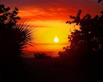 Beach Sunset Art Print - Black Yellow Orange Palm Tree Silhouette Beach House Wall Art Home Decor Photograph