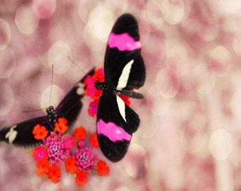 Butterfly Flower Art Print - Pink Fuschia Orange Black Bokeh Nursery Girl Room Whimsical Wall Art Photography
