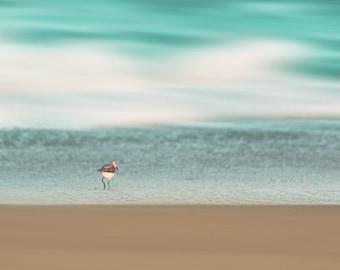 Beach Bird Sandpiper Art Print - Abstract Ocean Beach House Decor Aqua Blue White Tan Wall Art Photograph