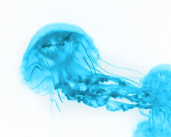 Jellyfish Abstract Art Print - Aqua White Blue Surreal Home Decor Wall Art Beach House Photograph