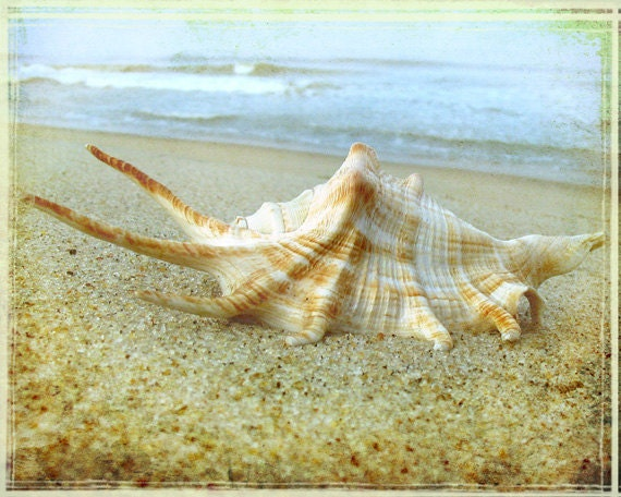 Conch Shell Art Print - Beach House Decor Pastel Soft Beige Tan Sand Ocean Wall Art Photograph