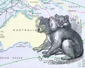 koala print on vintage australia map 5 x 7