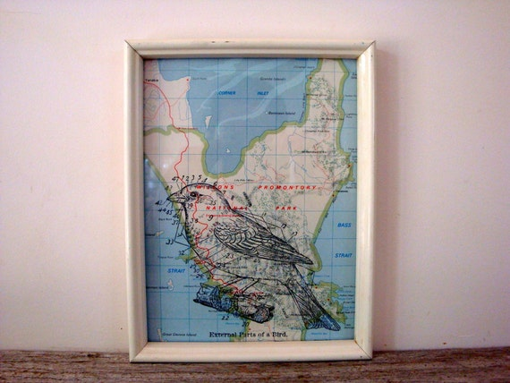 Bird Anatomy Framed Print on Vintage 6 x 8 Map of Wilsons Promontory, Australia