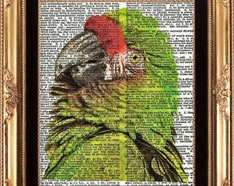 Parrot Print Antique Vintage Dictionary Art Book Page Plate Beautiful Green Large Bird Portrait Tropical Island Rainforest Pet to Frame