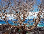Hawaii, Hana, Maui, tree, ocean, island, blue, blue sky, rocks, home decor, wall decor, landscape, water, nature - HANA TANGLED TREE 5x7