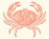 Coral Pink Baltimore Steamed Crab Art Print 8 x 10