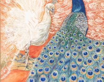 Peacock Art Print, Peacocks Albino, White and Teal, Blue  in Plumage Display art print,11x14 art photo print