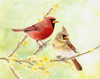 Cardinals in the Forsythia, 8x10 PRINT from original watercolor painting. home decor, birds, art & collectibles, wall art, Earthspalette