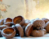 50 VERY LARGE natural acorn caps - for crafts and decoration