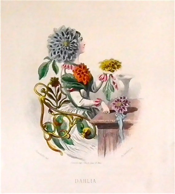 Dahlia hand colored plate from Les Fleurs Animees by JJ Grandville