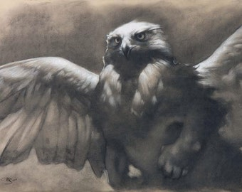 Dawn - A majestic and mythical griffin / gryphon - 12 x 18 art print of a charcoal drawing