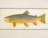 Double Matted Limited Edition German Brown Trout Print