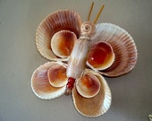 Large Sea Shell Butterfly