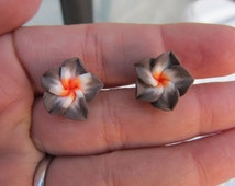 15mm Hawaiian White with Brown Edge Plumeria Frangipani Polymer Clay Post Earrings with an Orange Center