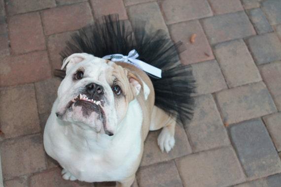 Black Dog Tutu
