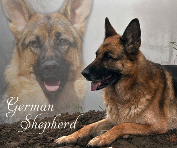 german shepherd blanket fleece blanket german shepherd softe blanket or throw 4283