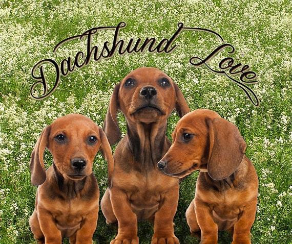 Fleece Blanket Dachshund Puppy Trio Wiener Dog Soft Blanket