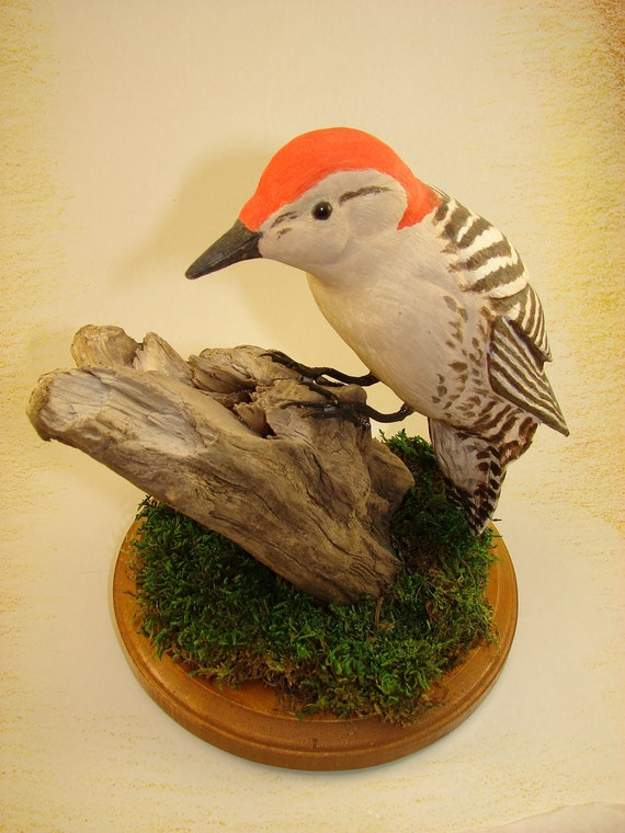 Redbreasted Woodpecker on driftwood