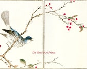 Japanese Art. Woodblock Bird and Flower Print Reproductions: Numata Kashu  - Brown-eared Bulbol and Winterberry, c.1880s - Fine Art Print - DaVinciArtPrints