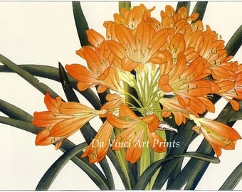 Japanese Art. 2 Fine Art Reproductions. Tanigami Konan: Woodblock Flower Prints - Clivia, Cineraria - Fine Art Prints