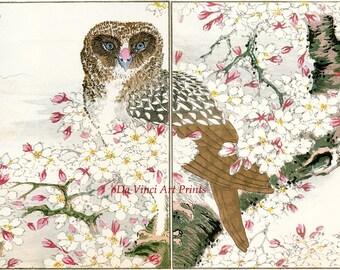 Japanese Art. Woodblock Bird and Flower Print Reproductions: Numata Kashu - Owl and Cherry Blossoms, c.1880s - Fine Art Print