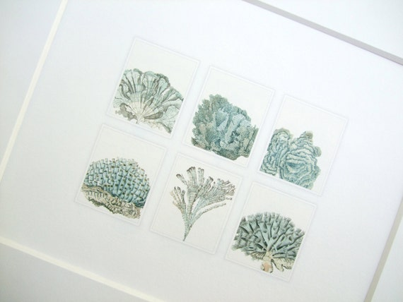 Blue Grey Sea Coral Collection Archival 8 x 10 Print