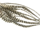 5 Feather Hair Extension: Long Natural Grizzly