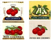 Cherries and Lima Beans Digital Image Download No 264