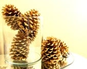 Festive Gold Pine Cones