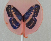 Butterfly Lollipops - 12 Gourmet Candy Lollipops with Blue/White Edible Images - Wafer Butterflies - Very Unique