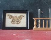 Vintage Science Moth Specimen. Dated May 18- 1922