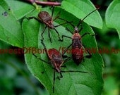 embossed note card. Stink bugs. original photo.