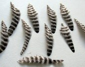 Grizzly Hen Feathers - Natural