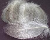 Mallard Barred Feathers - Natural
