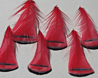 Lady Amherst Pheasant Tippet Feathers - Red  Large