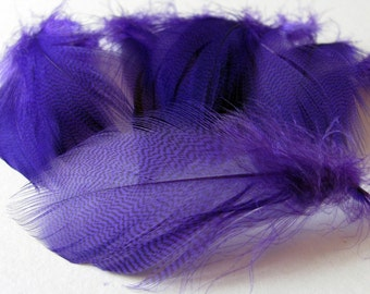 Mallard Barred Feathers - Dyed Purple