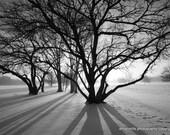 Tree Shadows on Snow - 11x14 Aluminum Art Print - Black and White Photograph - Nature Photography - Winter Snow Art