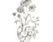 "8x10"" PRINT of original drawing ""Blooming Heart""- graphite, art, anatomy, floral, heart, valentine"
