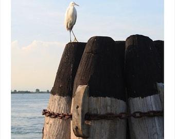 Bird, Venice Italy Photo Print